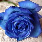 icon140_flower_1